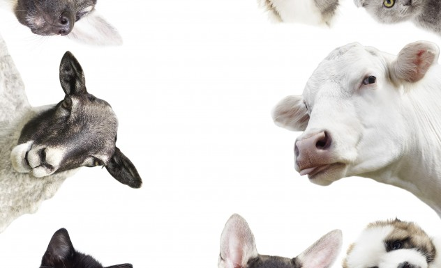 Welcome to farmandpet